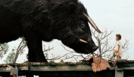 Oscar Review: Beasts of the Southern Wild (Best Picture)