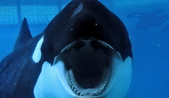 Podcast: Blackfish – Extra Film