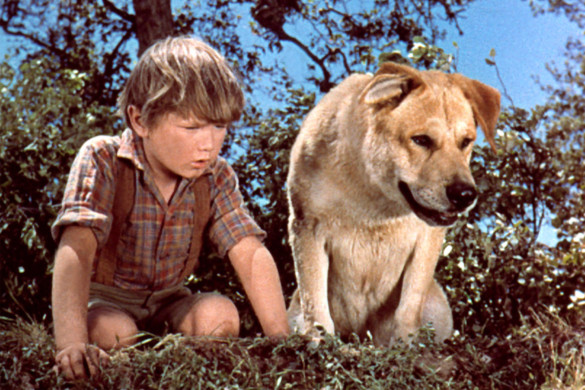 Poll: What is the best dog movie?