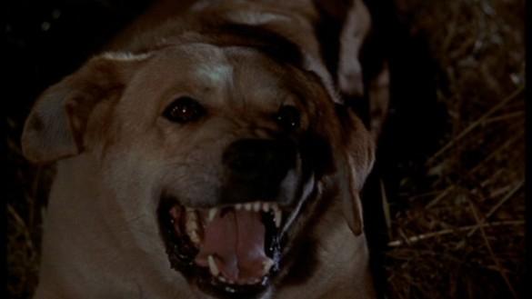 List: Top 3 Dog Scenes